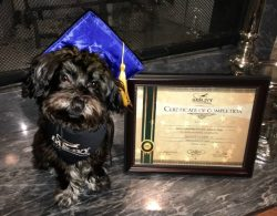 gracie-is-a-graduate-8-26-16-aedit